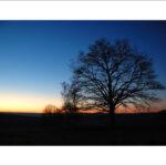 arbres_au_cre_puscule.jpg